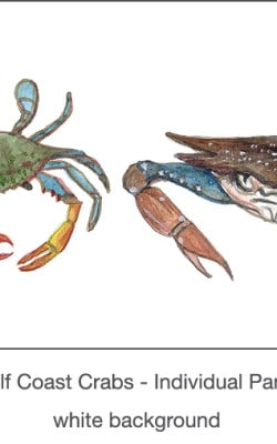 Casart_Gulf Coast Crabs white_1x