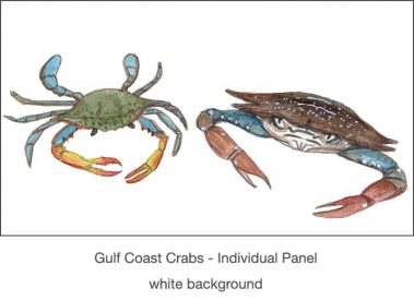 Casart_Gulf Coast Crabs white_1x