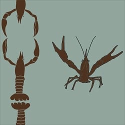 Casart_Crawfish-Cotillion Brown Celadon 2_11