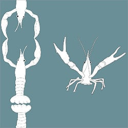 Casart_ Crawfish-Cotillion White Teal_Gulf Coast Design 2_13