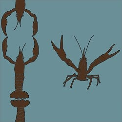 Casart_Crawfish-Cotillion Brown Teal 2_15