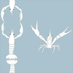 Casart_Crawfish-Cotillion White Light Blue 2_2