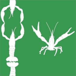 Casart_Casart_Crawfish-Cotillion White Green 2_21