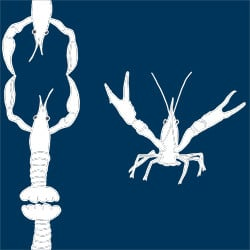 Casart_Crawfish-Cotillion White Navy 2_7