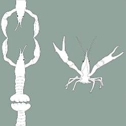 Casart_Crawfish-Cotillion White Celadon 2_9