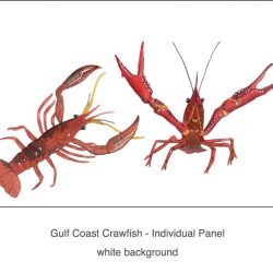 Casart_Crawfish white -Gulf Coast Design_1x