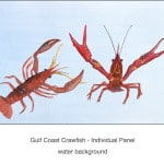 Casart_Crawfish water -Gulf Coast Design_2x