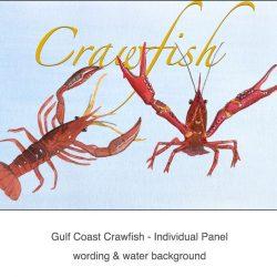 Casart_Crawfish water & wording - Gulf Coast Design_4x