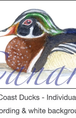 Casart_Gulf Coast Ducks_Panel white & wording_3x