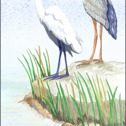 Casart_Gulf Coast Birds - water_2x