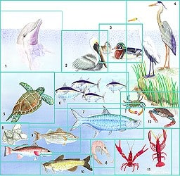 Casart_Gulf-Coast Mural_Layout Example_1