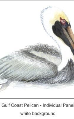 Casart_Gulf Coast Pelican white_1x
