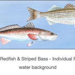 Casart_Gulf Coast Redfish_Bass water_2x