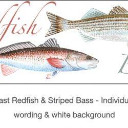 Casart_Gulf Coast Redfish_Bass white & wording_3x