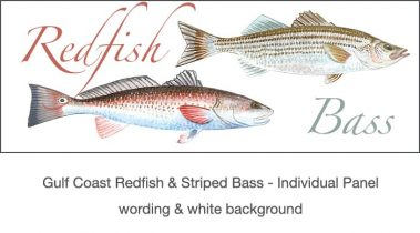 Casart_Gulf Coast Redfish_Bass white & wording_3x