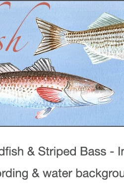Casart_Gulf Coast Redfish_Bass water & wording_4x