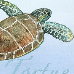 Casart Coverings Element: Sea Turtle no. 5 – Gulf Coast Design water & wording_4