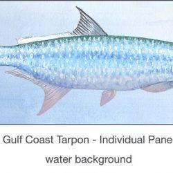 Casart Gulf Coast Tarpon water_2x