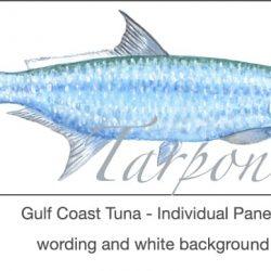 Casart Gulf Coast Tarpon white & wording_3x