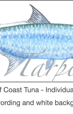 Casart Gulf Coast Tarpon white & wording_3x