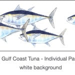 Casart_Gulf Coast Tuna white_1x