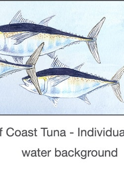 Casart_Gulf Coast Tuna water_2x