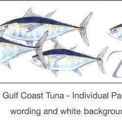 Casart_Gulf Coast Tuna white & wording_3x