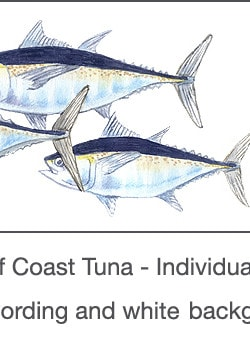 Casart_Gulf Coast Tuna white & wording_3x
