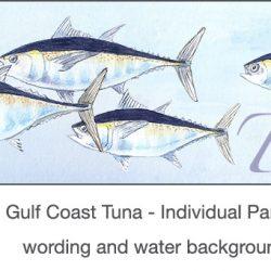 Casart_Gulf Coast Tuna water & wording_4x