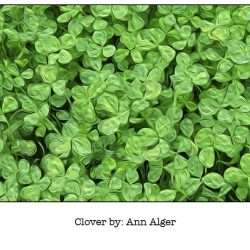 Casart Clover Bloom Series - Ann Alger 1x