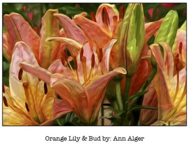 Casart Orange Lily & Bud Bloom Series - Ann Alger 2x
