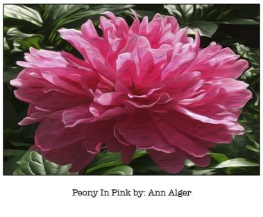 Casart Peony In Pink Bloom Series - Ann Alger 3x