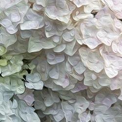 Casart coverings White Petal – Bloom Series by Ann Alger