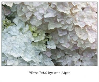 Casart WhitePetal_Bloom Series - Ann Alger 5x