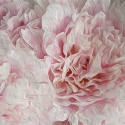 Casart coverings White & Pink Peonies Bloom Series by Ann Alger