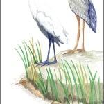 Casart coverings Gulf Coast Egret Birds_1x