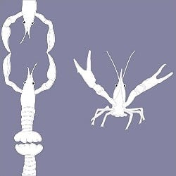Detail - Casart Crawfish Cotillion white light purple double crawfish dancing design on temporary wallpaper