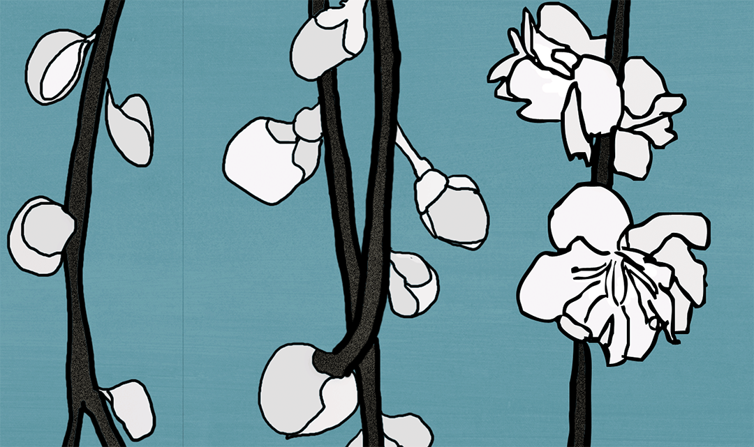Plum Blossom Detail Van Gogh Blue 6_print size_Casart Coverings removable wallpaper